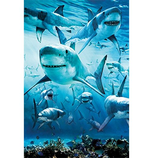 Image of Shark - Infested (Poster Maxi 61x91,5 Cm)