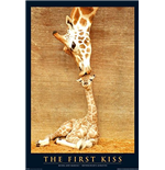 First Kiss (Poster Maxi 61x91,5 Cm)