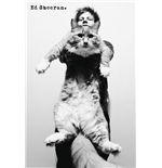 Ed Sheeran - Cat (Poster Maxi 61x91,5 Cm)