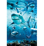 Shark - Infested (Poster Maxi 61x91,5 Cm)